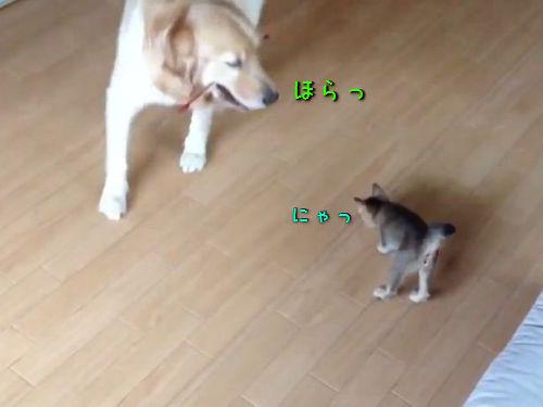 猫じゃらしマスターの犬00