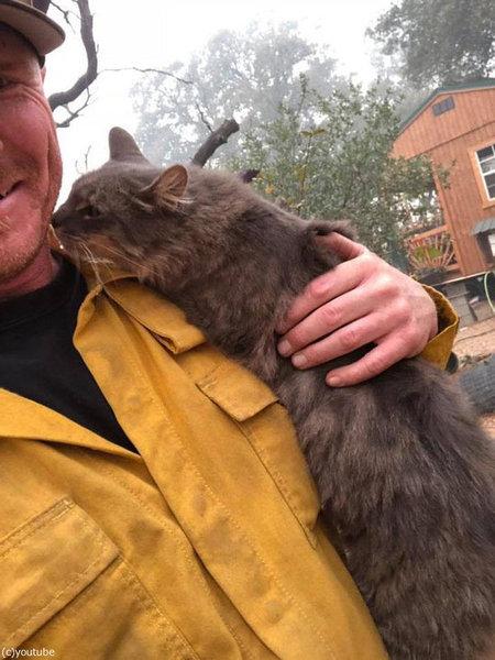 山火事から救出された猫01