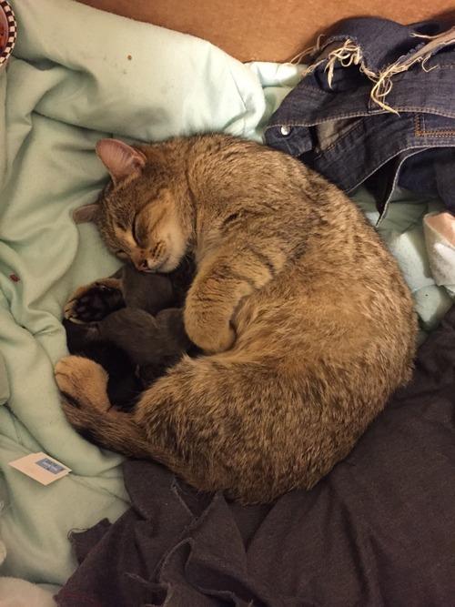 妊娠した野良猫01