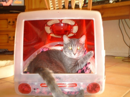 iMacと猫07