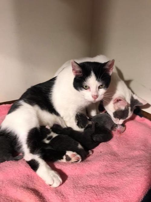 2匹のママ猫04