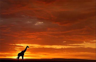 美しいアフリカ01