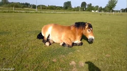 いびきの大きな馬04
