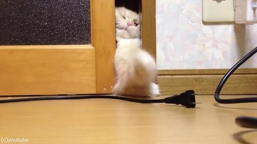 ドアを開けて欲しい猫02