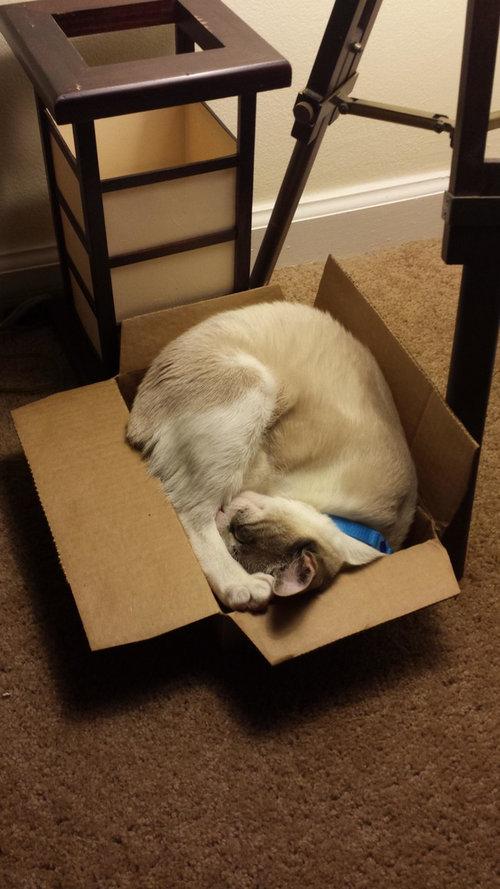 どこでも寝る猫たち01