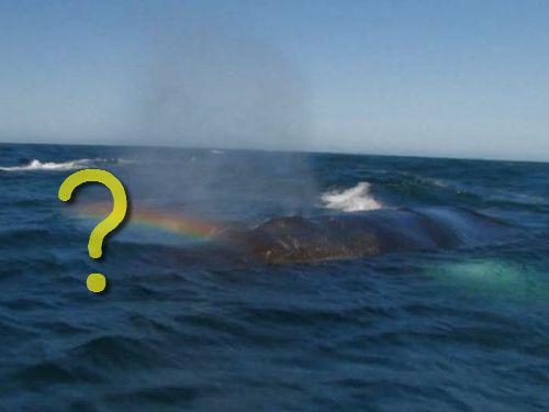 クジラからレインボービームが放たれる