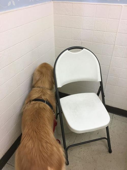 獣医に行くと悟った犬05