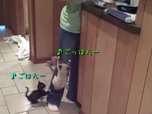 お腹を空かせた子猫たち00