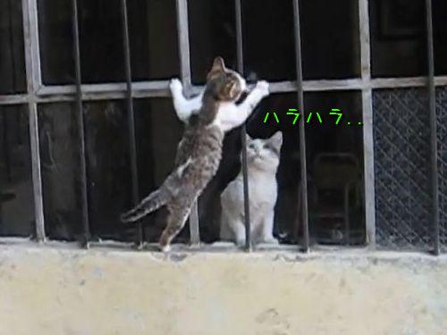 子猫を抱きかかえて助けいれる親猫00