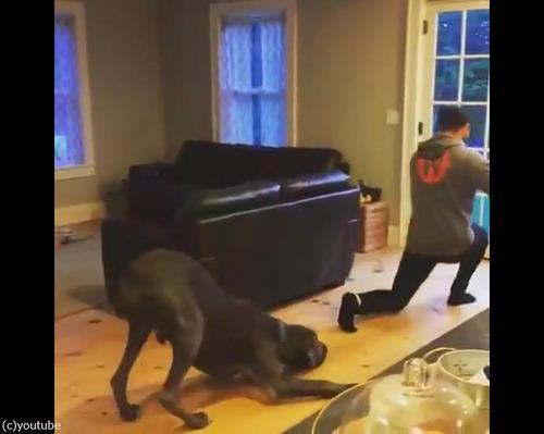 飼い主さんのエクササイズを真似っこする犬04
