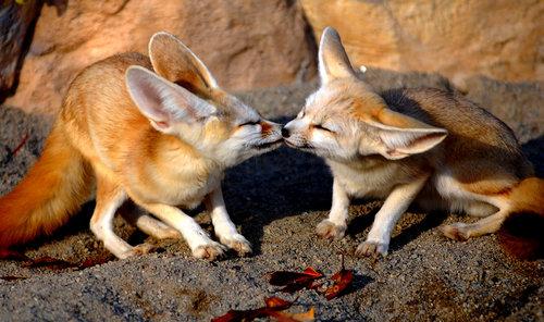 動物たちのキス18