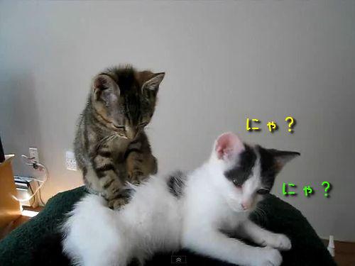 子猫のマッサージ