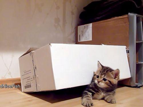 子猫と穴開きダンボール01