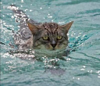 泳ぐ猫12