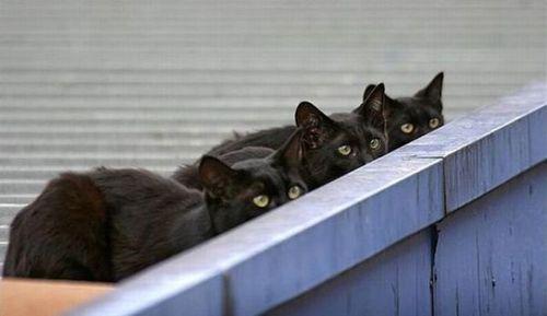 猫は見ている22