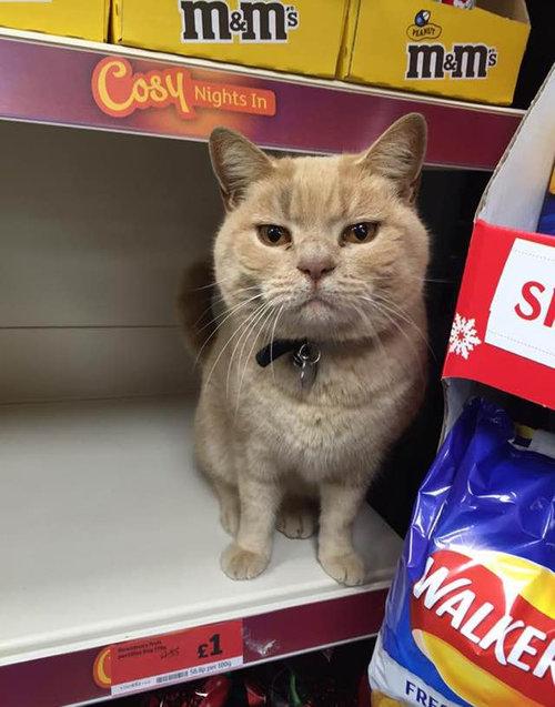 スーパーマーケットに住みついた猫01