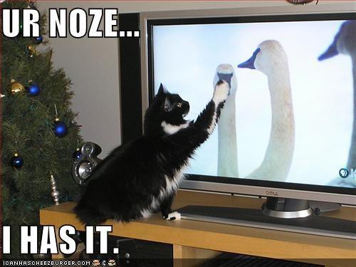 テレビを見るのを邪魔する猫04