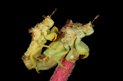 虫の交尾13