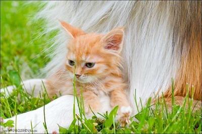 子猫の親友10