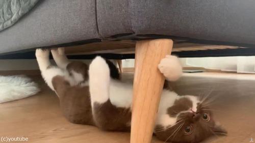 逆さに歩く猫04