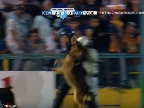 サッカーと警察犬03