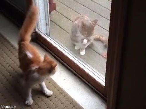 ハイテンションの猫と冷静な猫05