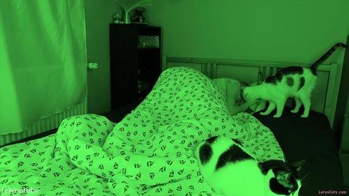 飼い主さんが眠っている間…猫たちはこんな感じ04