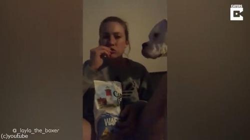 犬が寝ている間にスナック菓子を食べようとしたら…06