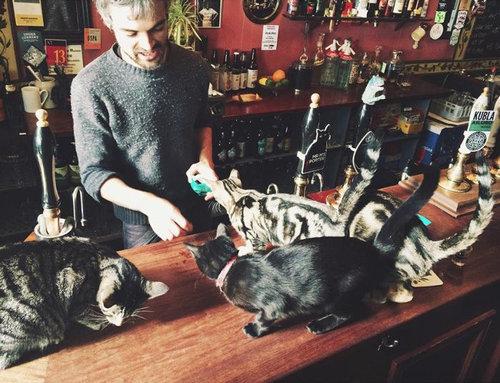 イギリスの猫パブ01
