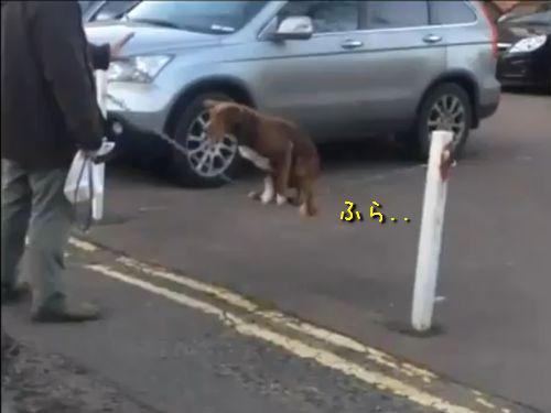 チェーンに乗る犬