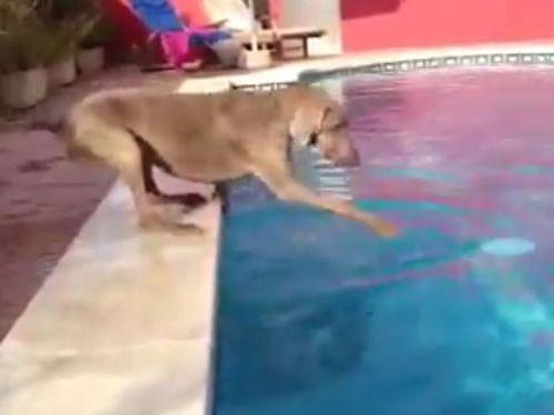 プールと犬01