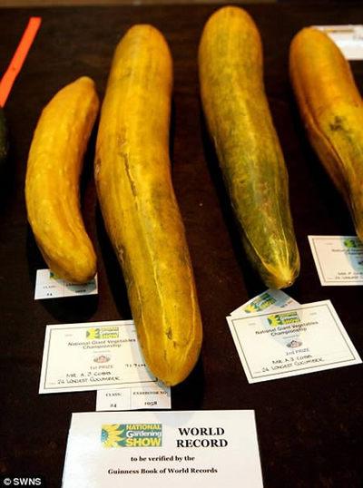 世界一大きな野菜や果物08