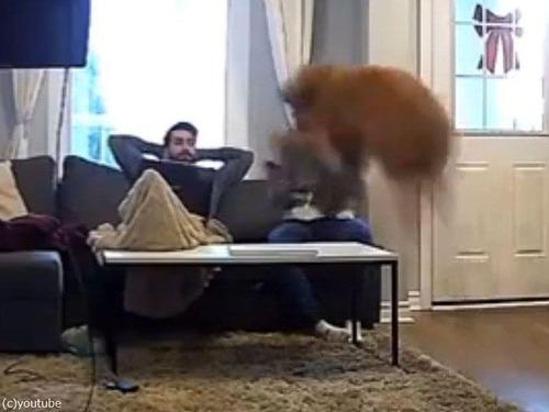 子犬の気持ちの大型犬02