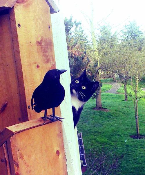 セントバーナードと猫04