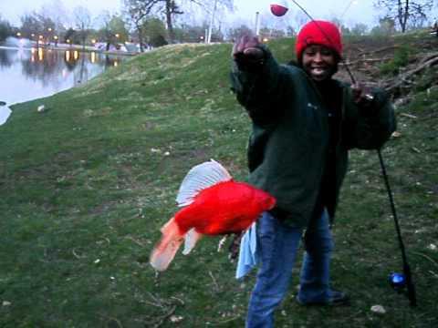 金魚が飼えなくなって人々が湖に放したその結果09