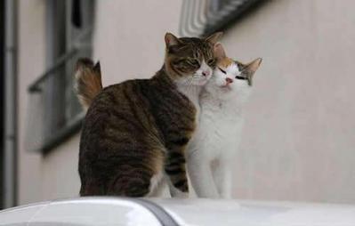 愛し合い猫01