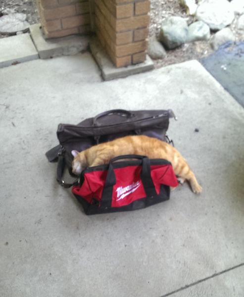 飼い主が旅行に行くことに気付いたペットたち17