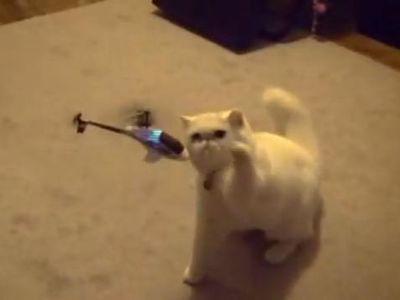 ヘリvs猫パンチ