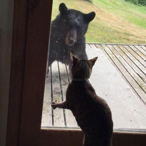クマを追い払う猫04