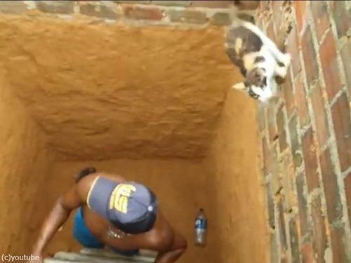 穴の下から猫を救出するつもりが06