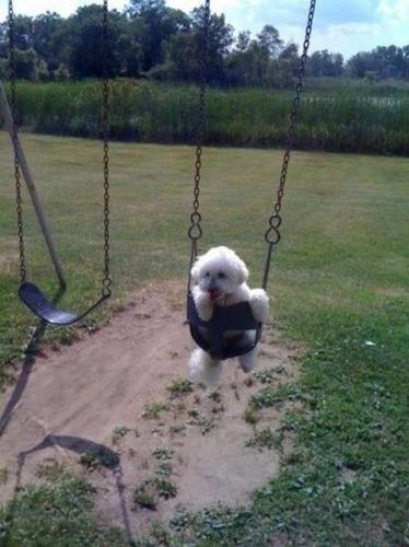 ブランコ犬11