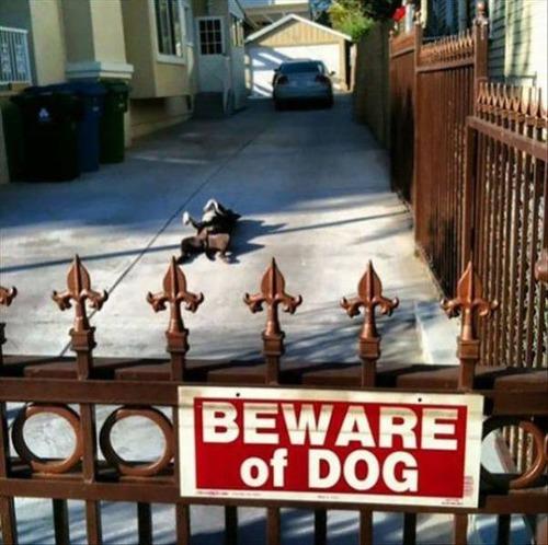 猛犬注意…と思ったら違う例03