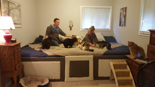 5匹の猫と2匹の犬02