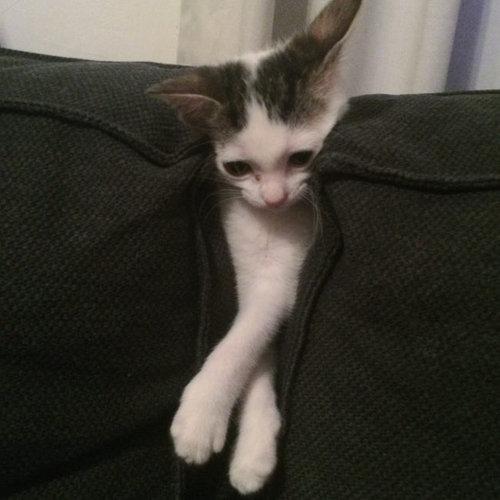「生後間もない子猫を拾ったの」07