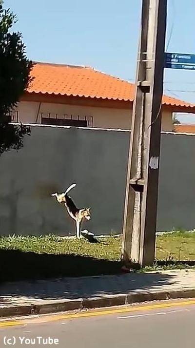 犬が壁越えジャンプにチャレンジ03