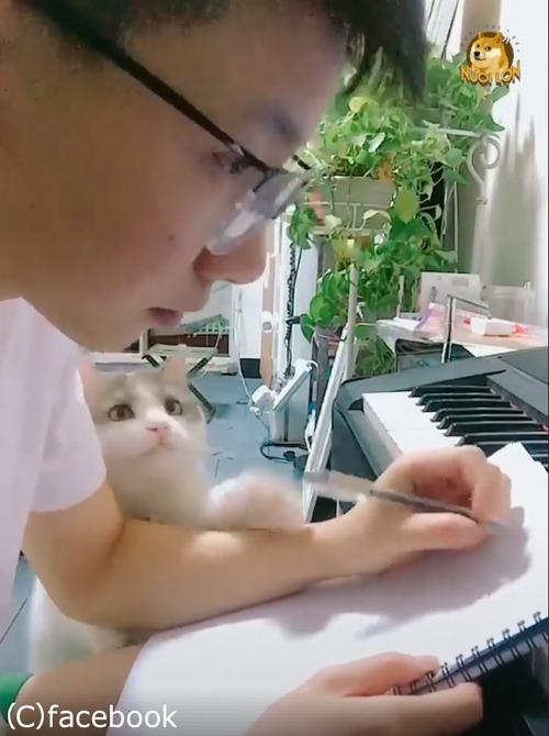この猫は絶対自分の可愛さを知ってる01
