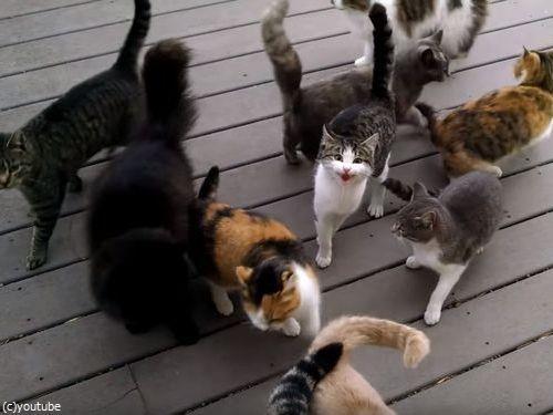 猫の大合唱04