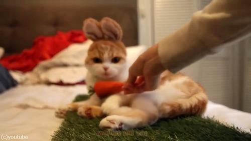 ウサギかと思ったら猫だった01