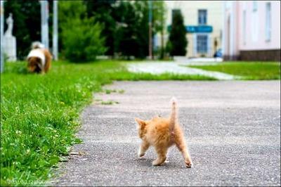 子猫の親友02