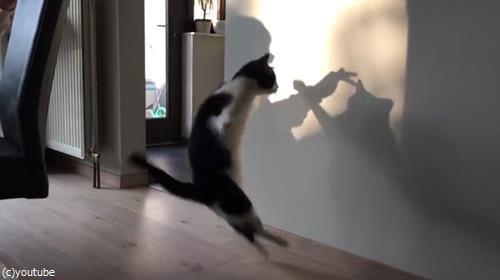猫VS影絵03